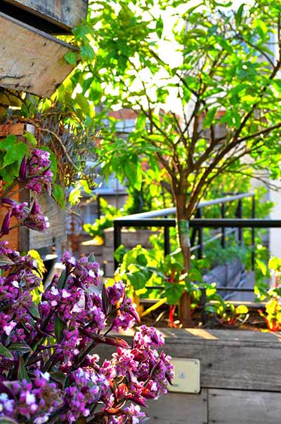 Ellie's Garden Buenos Aires Poetry Building Purple Flowers Orange Tree Sunlight