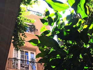 Sunlight Through Leaves Poetry Building Courtyard